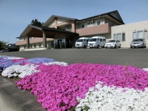 玄関前の芝桜